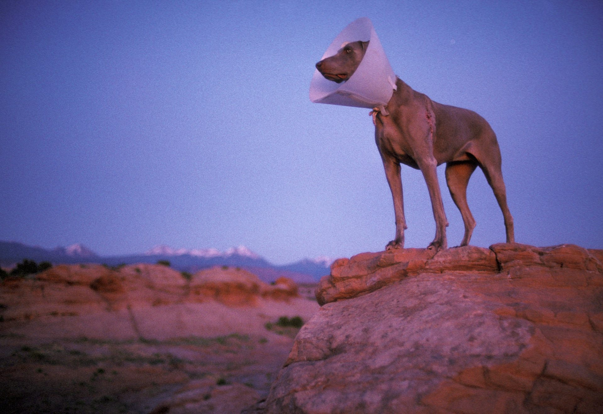 Photo: Sage the dog wears a protective collar to keep her from licking a wound she suffered on Moab's Slickrock Trail earlier in the day.