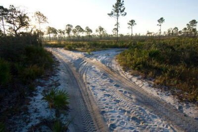 Photo: A sandy road at Archbold Biological Station in Venus, FL.