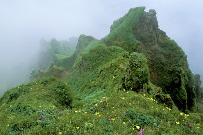 Photo: Wildflowers dot the cliffs of St. George Island in the Pribilofs (Alaska.)