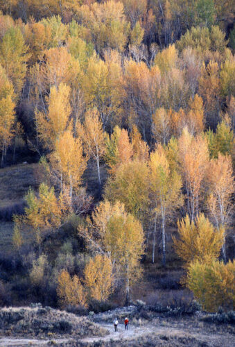 Photo: Two hikers enjoy fall color on the Salmon River in Idaho.