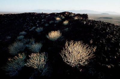 Photo: Scenic from Cabeza Prieta NWR, Arizona.