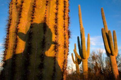 Photo: Cabeza Prieta NWR, Arizona.