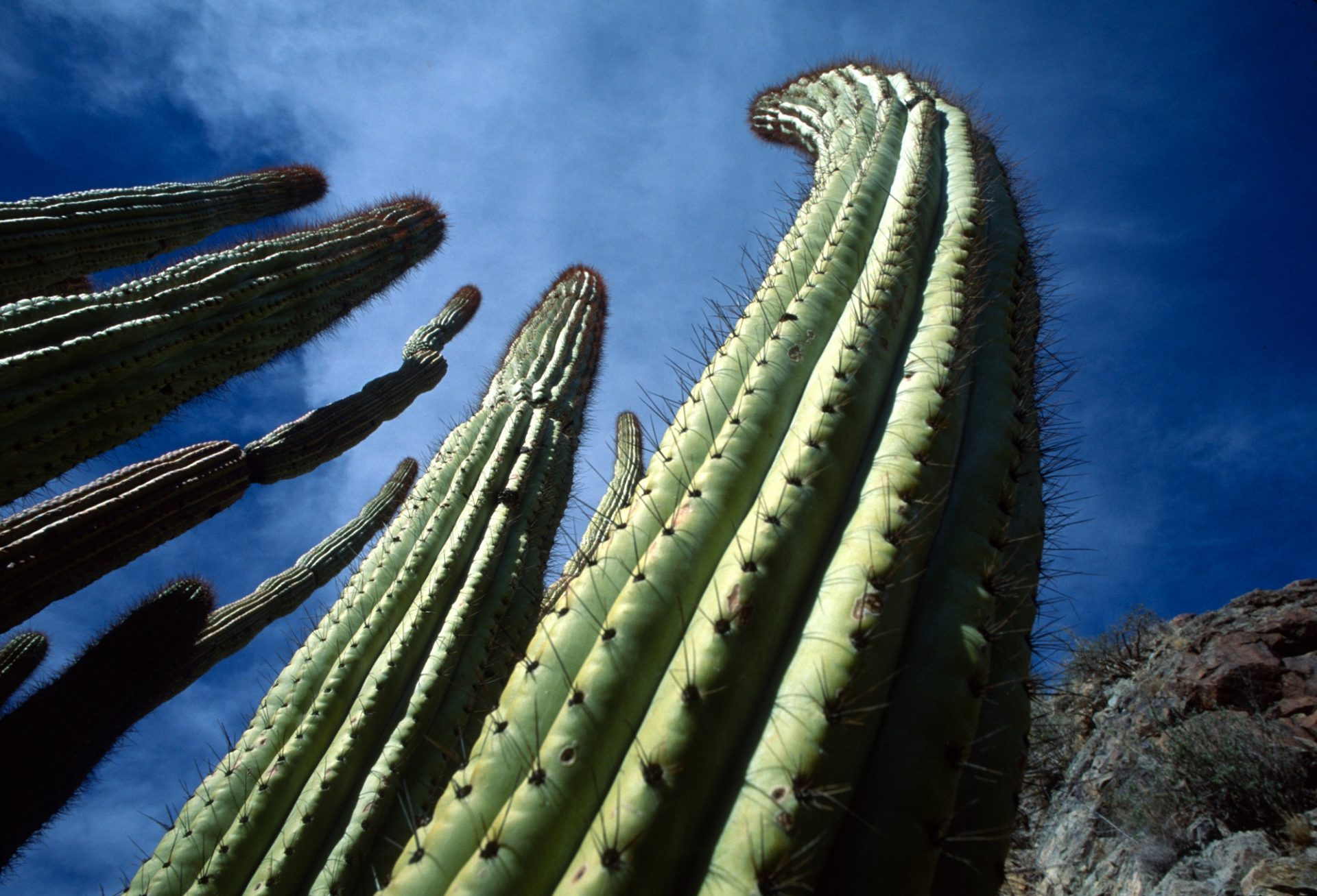 Photo: Cactus at Cabeza Prieta National Wildlife Refuges, Arizona.