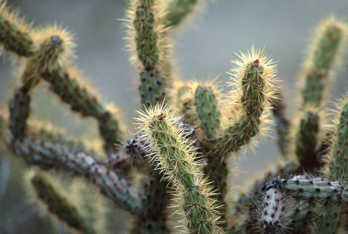 Photo: Cactus at Cabeza Prieta National Wildlife Refuges, Arizona.