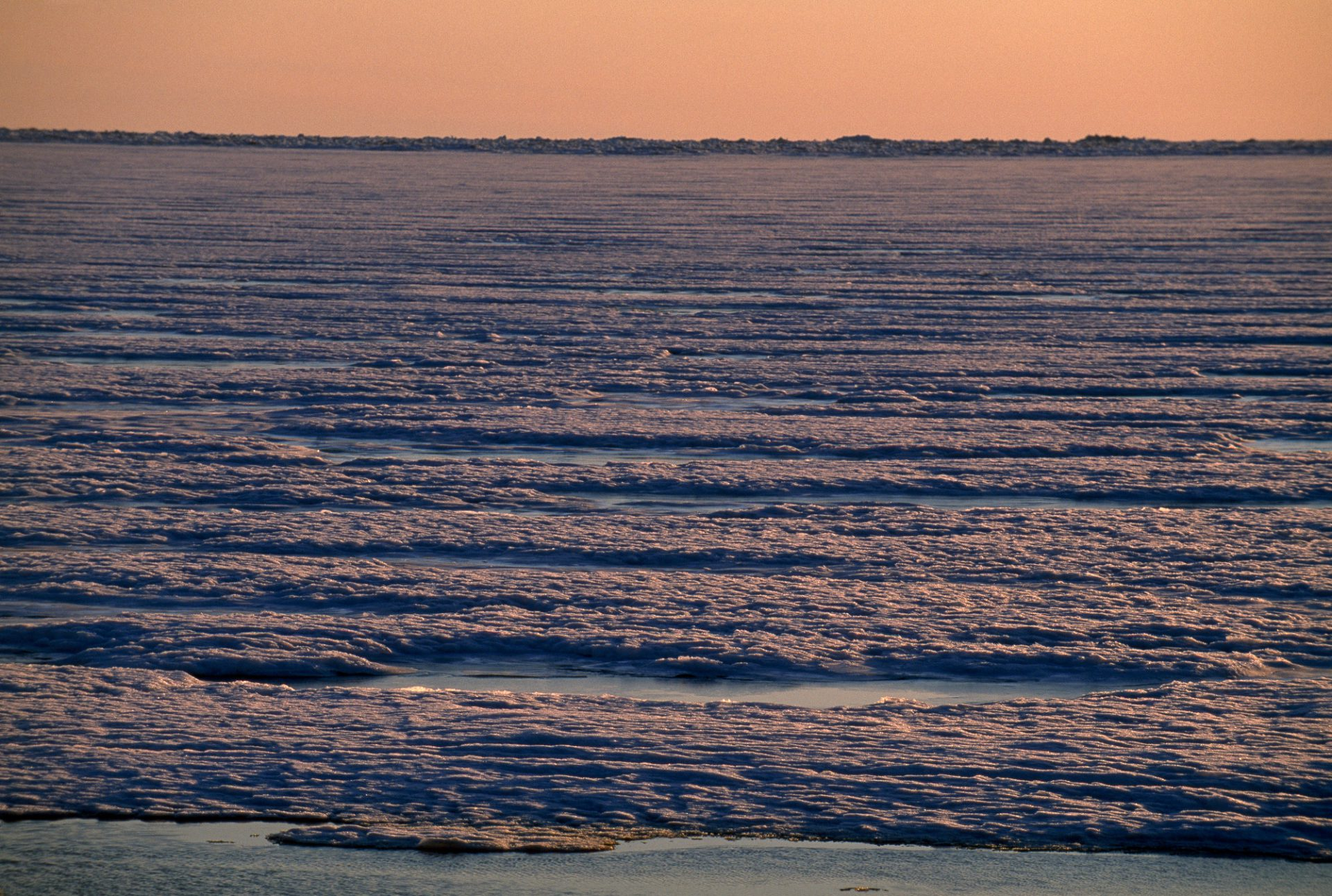 Photo: A blanket of sea ice over the Beaufort Sea, near Prudhoe Bay.