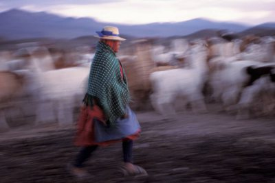 Photo: An Aymara (indigenous) woman herds llamas in the high altitudes of the Atacama Desert in Chile.