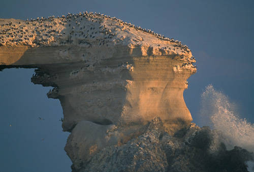 Photo: The cold Humboldt current splashes up against a cliff packed with a breeding bird colony near Antofagasta, Chile.