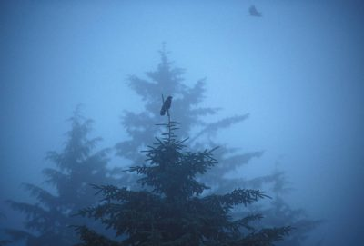 Photo: The trees of Clayoquot Sound's old-growth rainforest emerge from the mist on Vancouver Island, British Columbia.