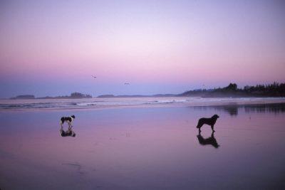Photo: The beach of Clayoquot Sound near Tofino, British Columbia.
