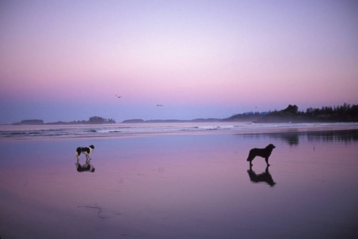 Photo: The beach of Clayoquot Sound near Tofino, British Columbia.