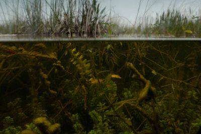 Photo: Marsh near Mahogany Hammock on the east side of the Everglades.