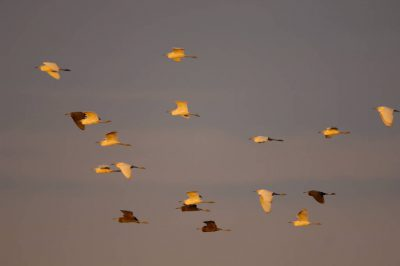 Photo: A group of birds fly over Shark Valley at the north end of Everglades National Park.