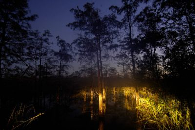 Photo: The marsh at sunrise in Mahogany Hammock near Everglades National Park, Florida.