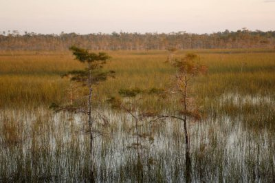 Photo: A scenic view of the marsh in Mahogany Hammock near Everglades National Park, Florida.