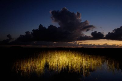 Photo: A landscape lit with car headlights at dawn in Everglades National Park.