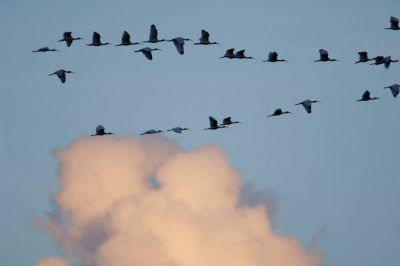 Photo: Birds fly at sunset in Everglades National Park.
