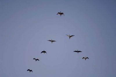 Photo: A group of birds fly in Everglades National Park, Florida.