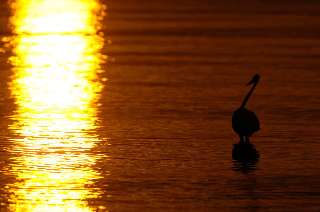 Photo: An egret at low tide near Everglades City, Florida.