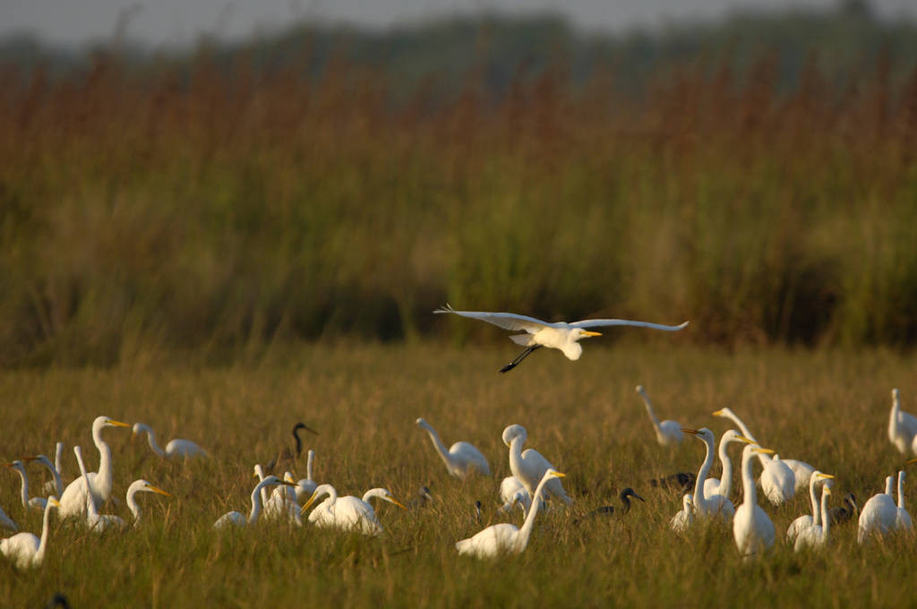 Photo: A group of egrets in Everglades National Park, Florida.