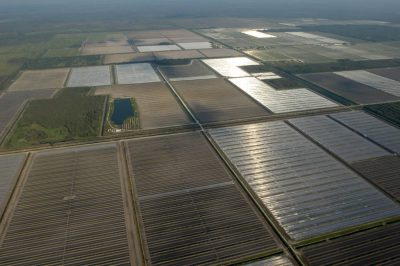 Photo: An aerial view of agriculture fields near Miami, Florida.