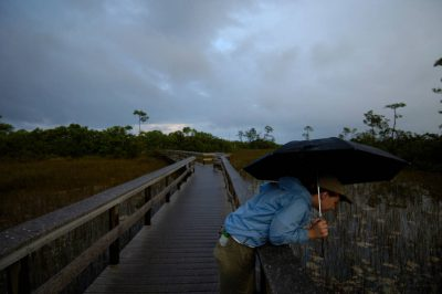 Photo: A woman with an umbrella leans over the board walk at Mahogany Hammock near Everglades National Park, Florida.