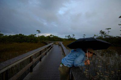 Photo: A woman with an umbrella leans over the board walk at Mahogany Hammock near Everglades National Park, Florida.