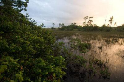 Photo: Mahogany Hammock in Everglades National Park, Florida.