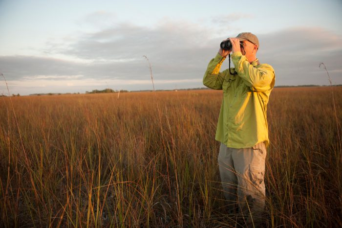 Photo: Banding crews working on the endangered Cape Sable seaside sparrow.