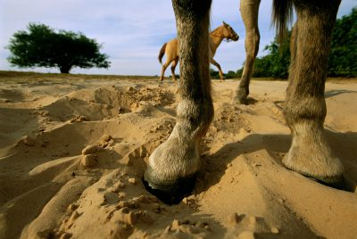 Photo: A horses hooves sink into soil during the dry season at Barra Mansa Ranch near Rio Negro in Brazil's Pantanal region.