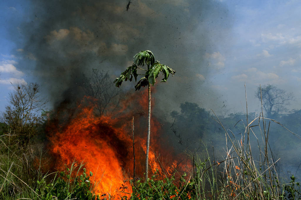 Photo: A fire burns in the Cerrado along the highway to Caceres in Brazil's Pantanal region.