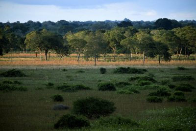 Photo: A view of the Brazilian Pantanal during the dry season, near Araras Eco Lodge.