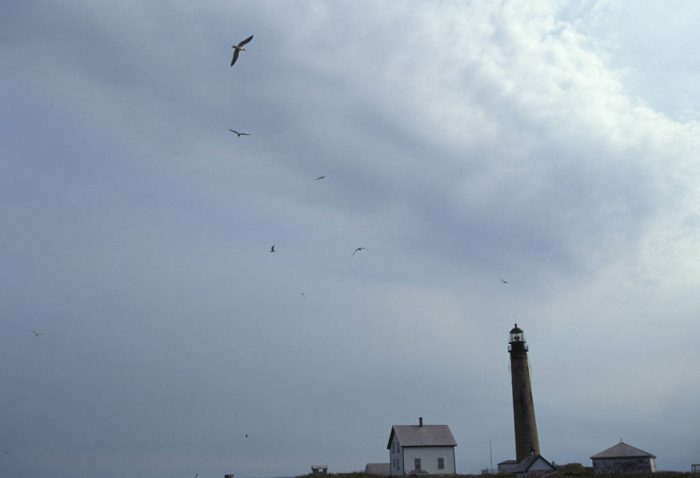 Photo: Birds fly around a lighthouse at sunrise at Petit Manan NWR in Maine.