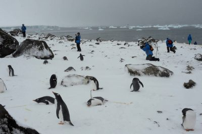 Ecotourists share space with a gentoo penguin (Pygoscelis papua papua) colony along Brown Bluff on the Antarctic Peninsula on the edge of the Antarctic Sound.
