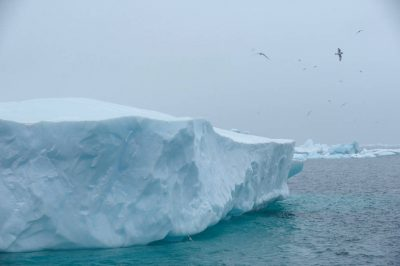 Photo: Deep blue ice and scavenger birds along Brown Bluff on the Antarctic Peninsula, on the edge of Antarctic Sound.
