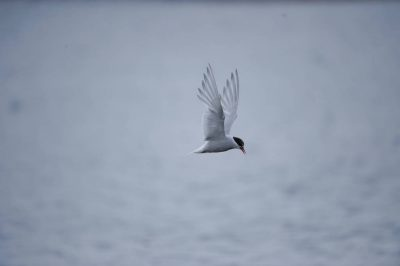 Photo: A bird flies above South Georgia Island in the Antarctic Peninsula.