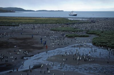 A king penguin (Aptenodytes patagonicus) rookery of up to 200,000 birds on South Georgia Island, Antarctica. The National Geographic Endeavor in the background.