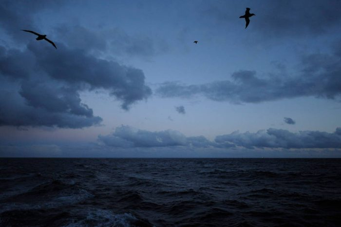 Photo: A seabird on the wind off the Argentinian mainland.
