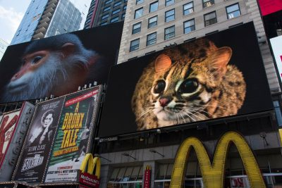 Photo: In an effort to raise awareness about the extinction crisis, Photo Ark images and video are displayed in Times Square, NYC.