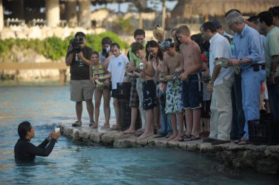 Photo: An annual sea turtle release is conducted among the tourists of Xcaret resort in Cancun, Mexico.