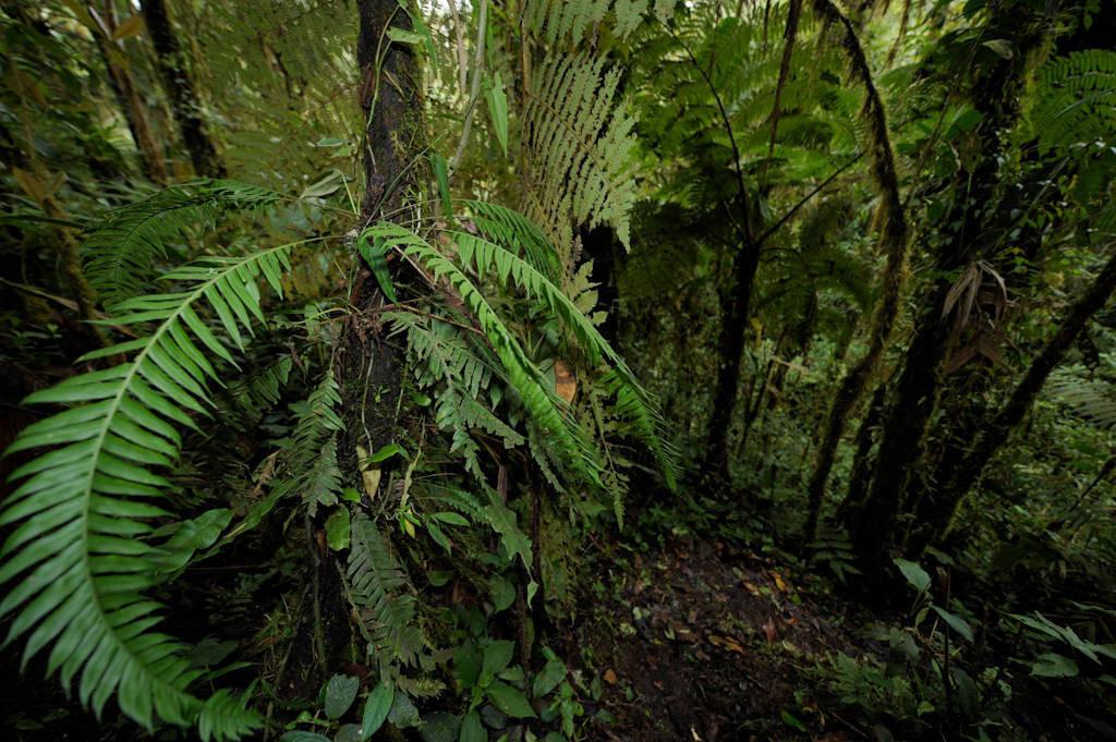 Photo: A cloud forest reserve near Mindo, Ecuador.