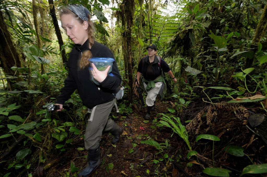 Photo: A team searching for amphibians in a cloud forest reserve near Mindo, Ecuador.