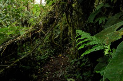 Photo: A cloud forest reserve near Mindo, Ecuador.