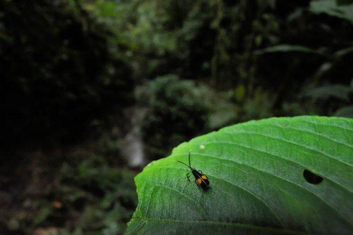 Photo: An arthropod walks along a leaf in a cloud forest reserve near Mindo, Ecuador.