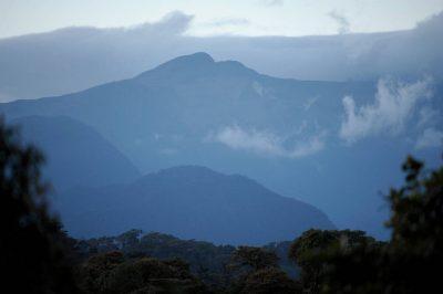 Photo: The cloud forest at sunrise near Mindo, Ecuador.
