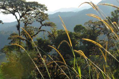 Photo: The cloud forest at sunrise near Mindo, Ecuador.