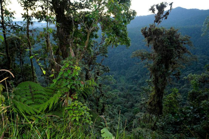 Photo: Scenic of the cloud forest near Mindo, Ecuador.