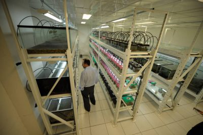 Photo: A biologist at the amphibian lab of Pontificia Universidad Catolica del Ecuador in Quito.
