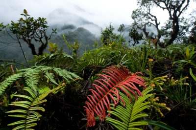 Photo: Scenics of mountain forest on the road north of Limon, Ecuador.