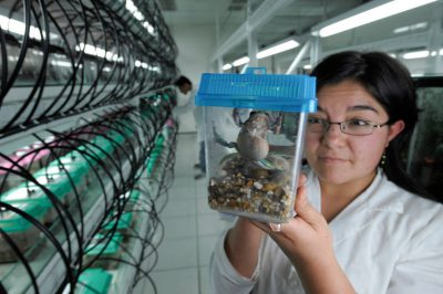 Photo: A scientist holds a captive frog at the breeding facility known as Balsa de los Sapos, or Amphibian Ark, at Quito's Catholic University, Ecuador.