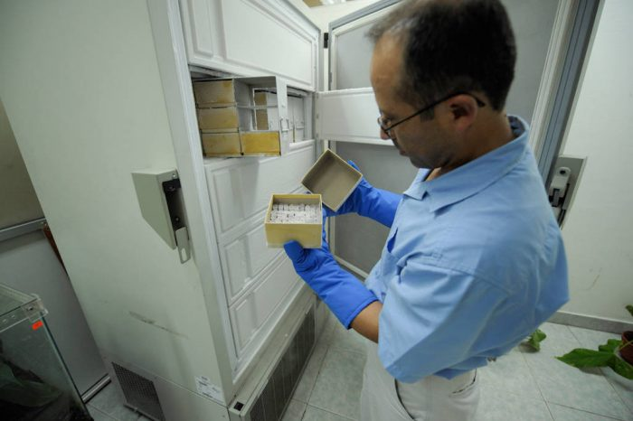 Photo: A scientist shows the deep freeze in his lab, which contains the DNA of all the frogs in their collection, a kind of frozen ark.